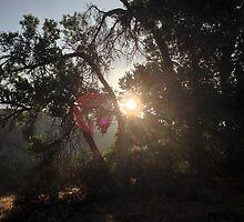 Morning Sun by frenchfri70x7