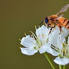 Bee and Blosssom by Bami