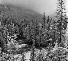 McDonald Falls, Glacier N.P. by Rodney Johnson
