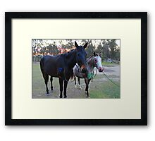 Painted Ponies Framed Print