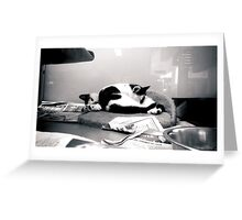 Kittens in a Pet Shop Greeting Card