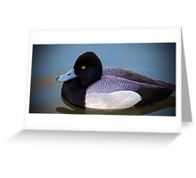 Greater Scaup  Greeting Card