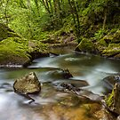 Golitha Falls by Paul Richards