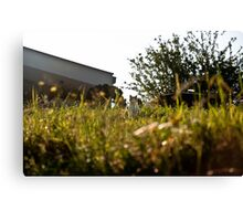 Cat in Long Grass Canvas Print