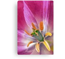 If You Knew a Tulip Canvas Print
