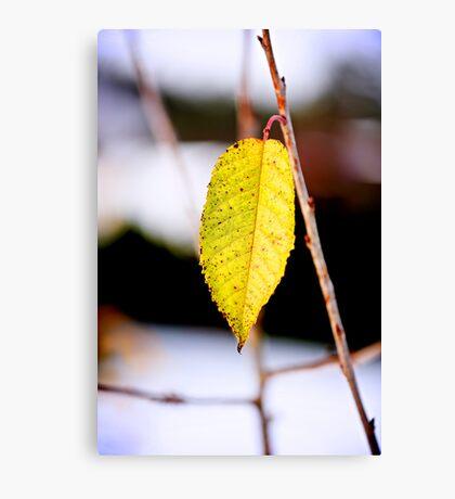 Brave leaf Canvas Print