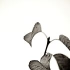 Leaves BW by Alex Volkoff