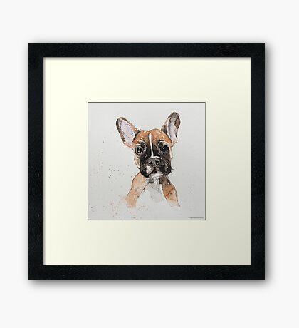 Swift Art, Dog Framed Print