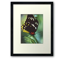 Red And Yellow Butterfly. Framed Print