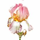 Thank You Greeting Items - Bearded Iris by MotherNature2