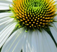 White Cornflower Sticker