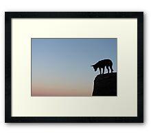 The patient dog Framed Print