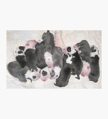 New Puppies For Laurie and Viv ~ Photographic Print