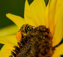 Busy Bee  by Nicole  Markmann Nelson