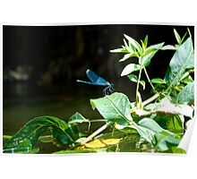 Blue Dragonfly at the Rivers Edge After a Meal Poster