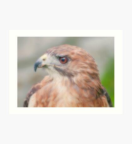 Red Tail Hawk Portrait Art Print