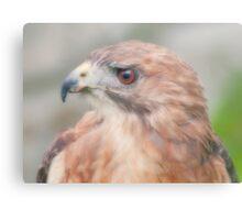 Red Tail Hawk Portrait Metal Print