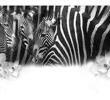 Zebra watercolor by Frederick  Olmsted
