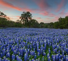Texas Bluebonnet Images - Evening in the Texas Hill Country 1 by RobGreebonPhoto