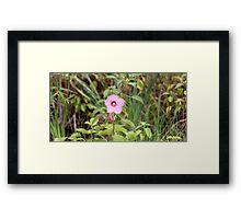 Pink Holly Hawk Framed Print