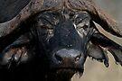 African Buffalo by Michael  Moss