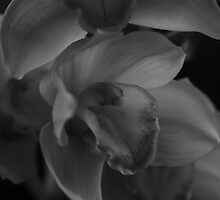 Orchids - Black and White Print by Jean-Pierre Mouzon