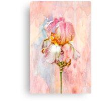 Bearded Iris in Pastels Canvas Print