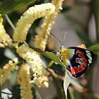 Scarlet Jezebel Butterfly by JLOPhotography