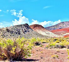 Nevada Can Be Colorful by marilyn diaz