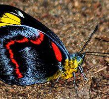 Madam Butterfly by Barbara Allen-Guthrie