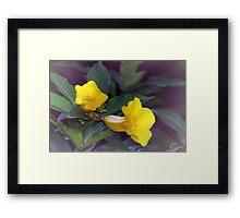 Yellow trumpet flowers Framed Print