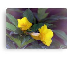 Yellow trumpet flowers Canvas Print