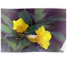 Yellow trumpet flowers Poster