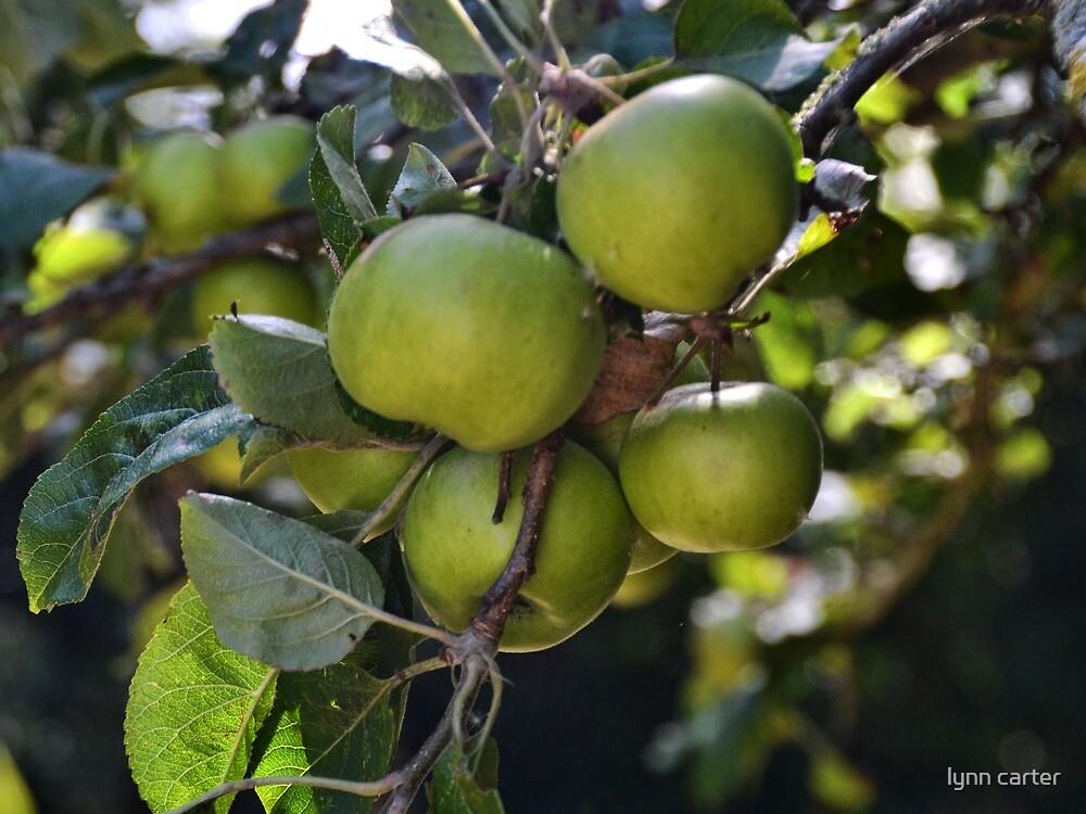 A Good Crop Of Apples by lynn carter