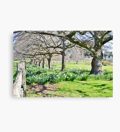 Spring at Ridgley Canvas Print
