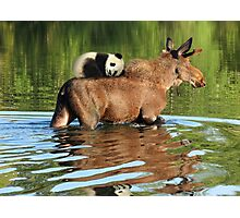 Taking a Ride on the Panda, err, um, Moose Express Photographic Print