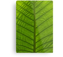 Tropical Green Leaf Metal Print