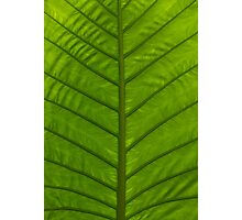 Tropical Green Leaf Photographic Print