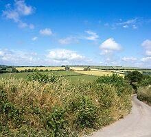 duloe country lane by Anne Scantlebury