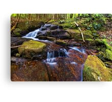 In the Forest Beside a Stream Canvas Print