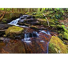In the Forest Beside a Stream Photographic Print