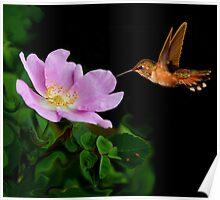 WILD ROSE~ Poster
