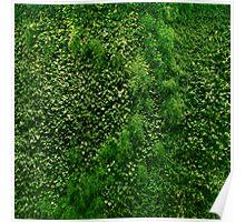 Vertical Garden Poster