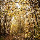 Per i boschi dell'Etna  by Andrea Rapisarda