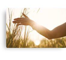 Female Hand Caressing High Grass Canvas Print