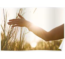 Female Hand Caressing High Grass Poster