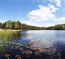 Scandinavian Lake & Forest by visualspectrum