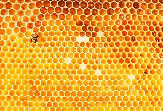 Honeycomb by visualspectrum