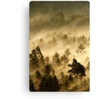 3.9.2013: Morning in Torronsuo National Park V Canvas Print