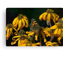 Butterfly - Red Admiral Canvas Print
